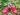 Barnetresko Smultron